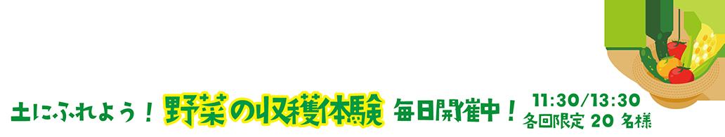 土にふれよう!野菜の収穫体験 毎日開催中! 11:30/13:30 各回限定20名様